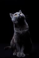 Kitty-Fotokunst-poes