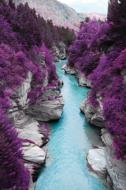Purple-Flowers-Fotokunst-nature