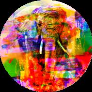 Fotokunst-olifant-kleurrijk-100-x-100-cm-rond