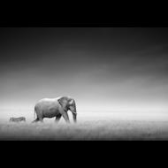 Fotokunst-olifant-en-zebra