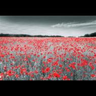 Fotokunst-klaprozen-veld