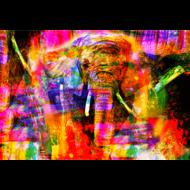 Fotokunst-olifant-kleurrijk