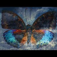 Fotokunst-vlinder