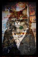 Cat-Mind