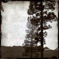 Shaded-tree