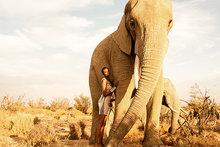 Elephants-gaze